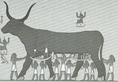 Nut as Sacred Cow