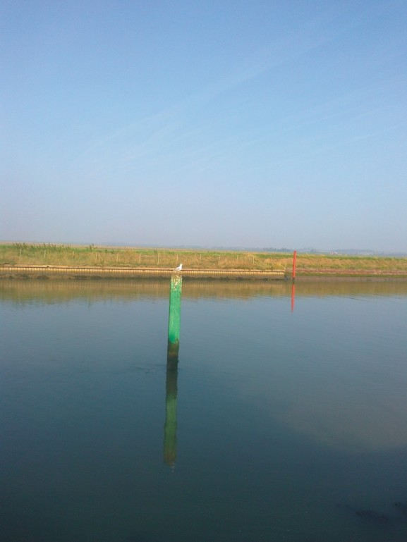 River Bure With Bird