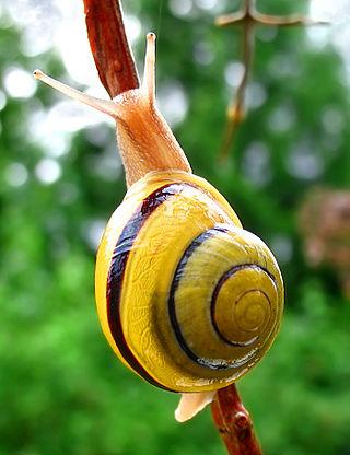 Pretty Snail on a Stick