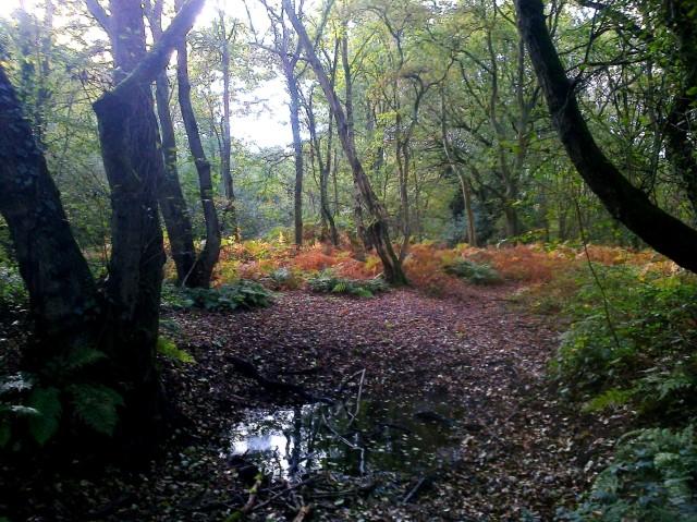 Autumn colours at Gunton Lane Recreation Ground, Costessey