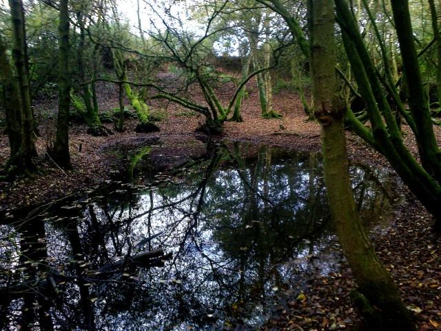Dark Pit at Gunton Lane, Costessey