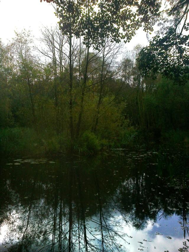 Dark Pool Reflections