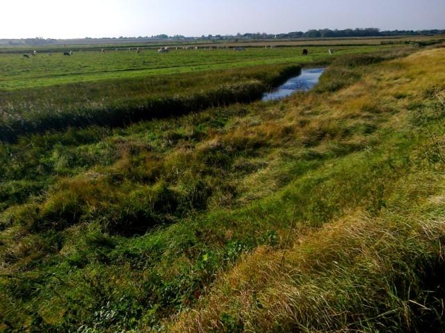 Drainage Channel  South-side Breydon