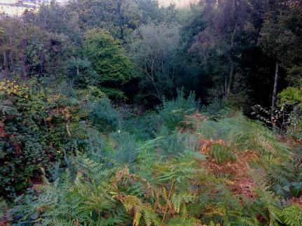 Ringland Hills Foliage