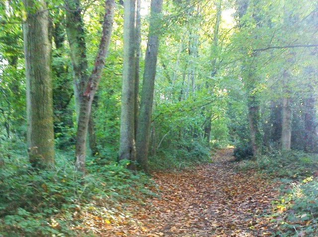 East Hills Woods, Costessey