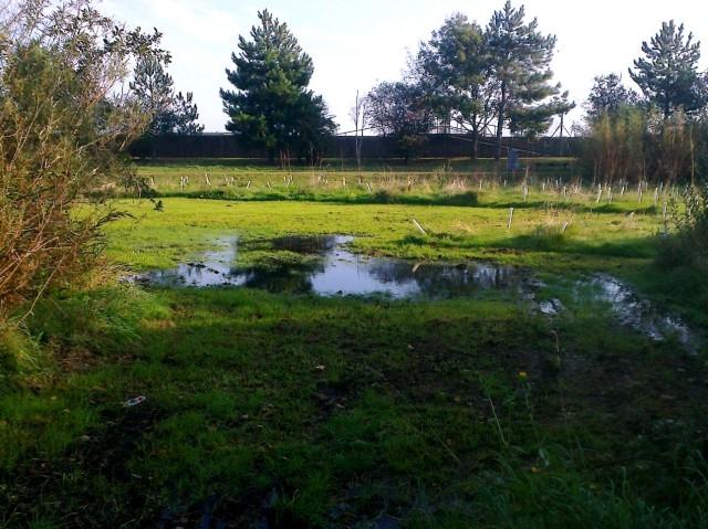 Marshy land at Cobholm