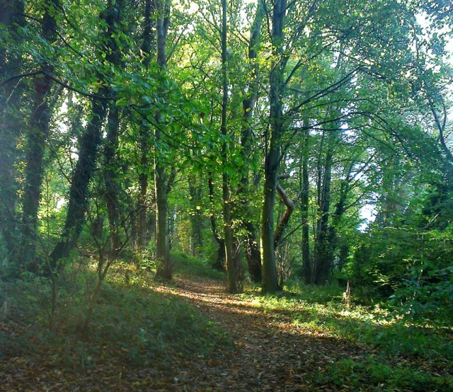 Woodland Path, East Hills Costessey