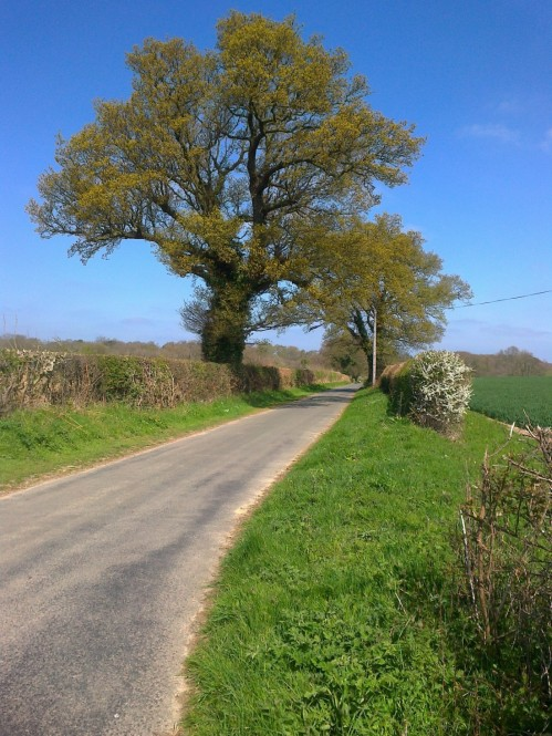 A Norfolk Country Road