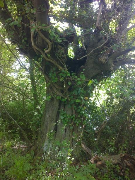 Tree 4