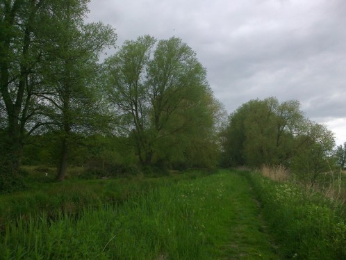 Willows by the Fleet
