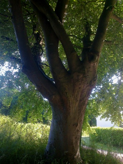 A Handy Tree 06 16