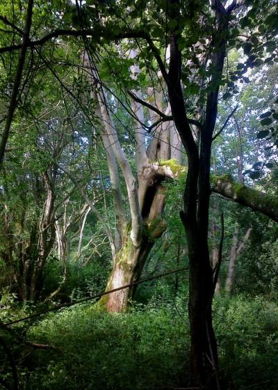 Broken Tree Smockmill Common 06 16