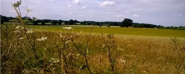 Hay meadows Poringland 07 16