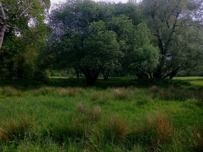 Swardeston_Watermeadow_05_16