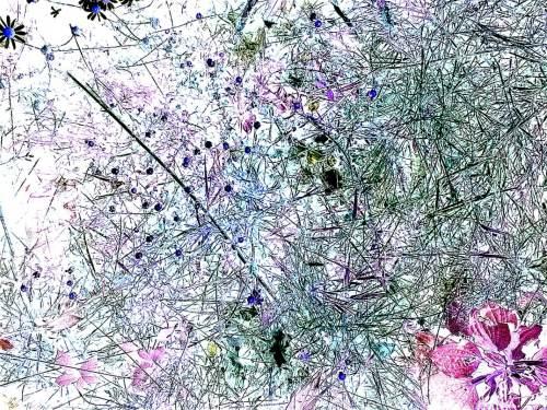 Blue Daisies Pink Plantain
