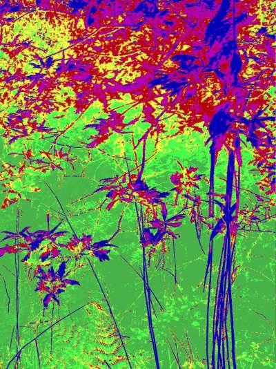 Flowering Oaks