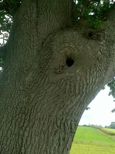 Oh Tree