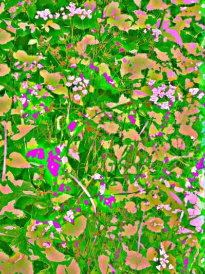 Pinks Pastels