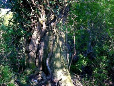 Tree or Snake