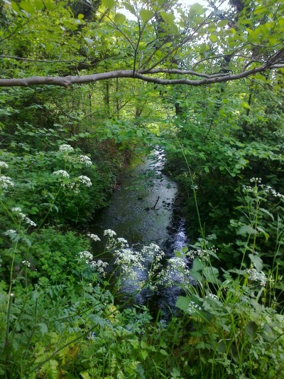 Woodland rills 2