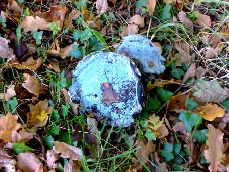 mouldy-fungi-02