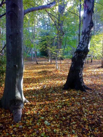autumn-colour-leader