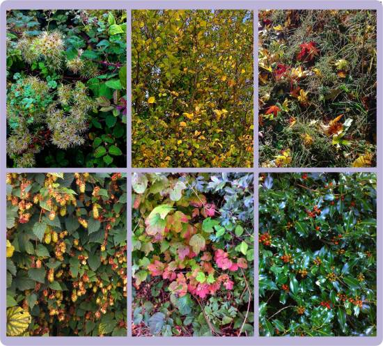 autumn-group-