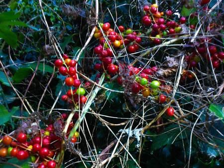 bryony-berry