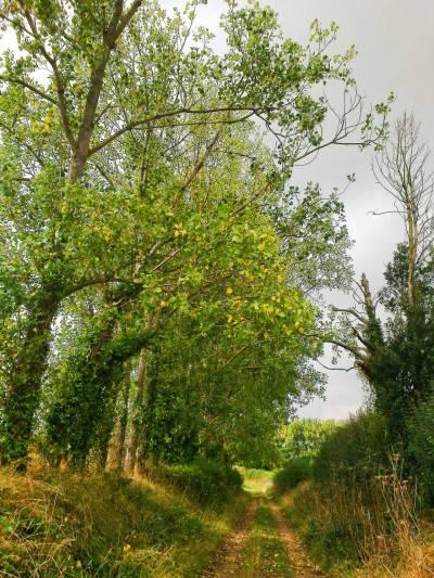 early-autumn-vista