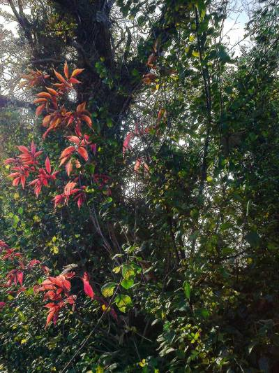 hedge-colour-1