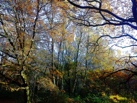 Autumn trees at Ringland Hills