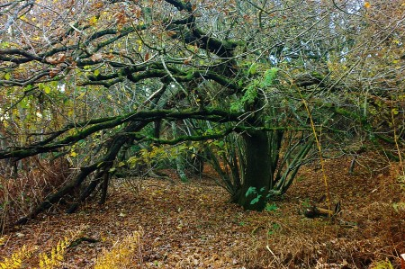 Tree at Costessey Common