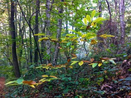 walk-in-woods-1