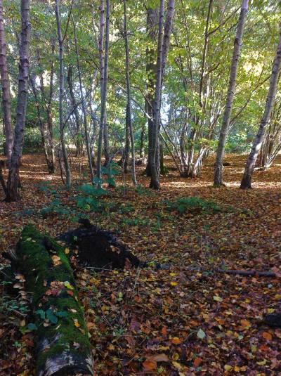 walk-in-woods-2