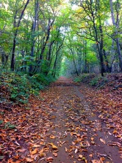 walk-in-woods-3