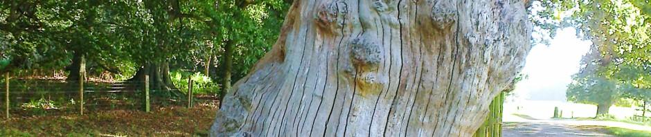 Grainy bark