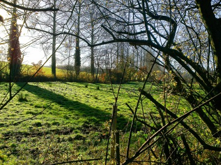 Meadow at Ringland