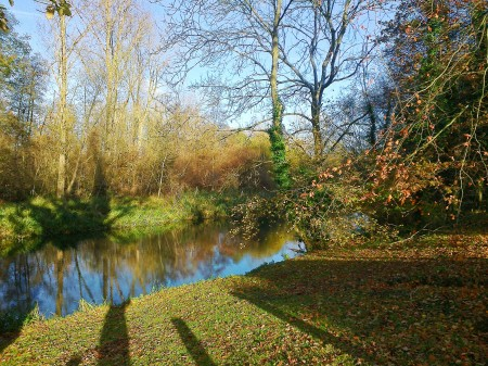 River Wensum at Beehive Cottage