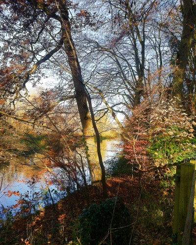 Autumn trees beside the Wensum