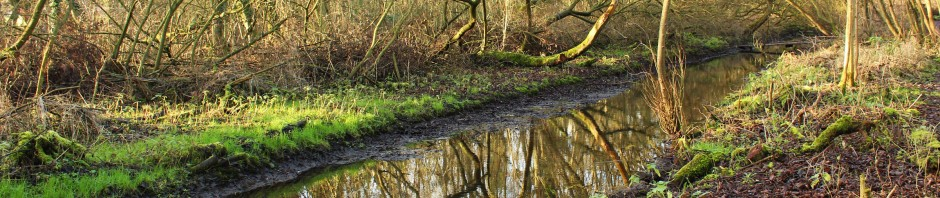 Coleman's Drain in Damgate Carr