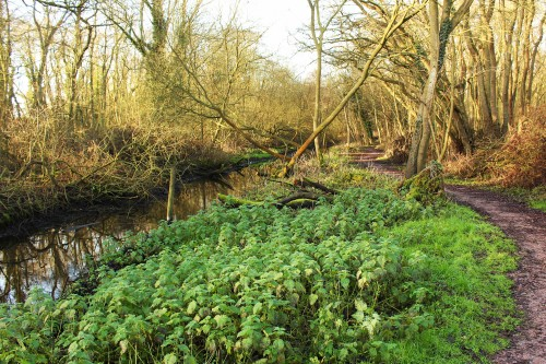 Coleman's Drain and footpath in Damgate Carr