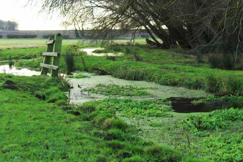Coleman's Drain along Acle marsh