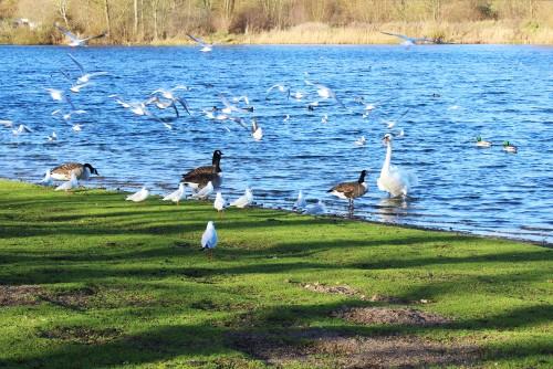 Birds at Whitlingham