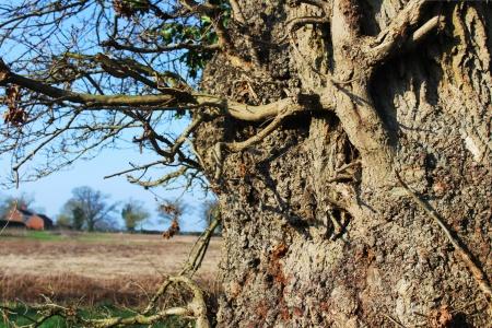 Gnarly Tree 14 Feb 2017
