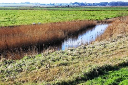 Drainage channel alongside Breydon