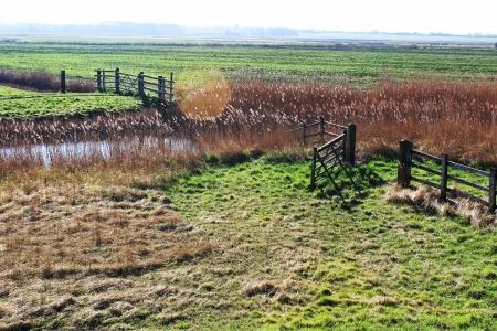 Grazing marshes South Side Breydon