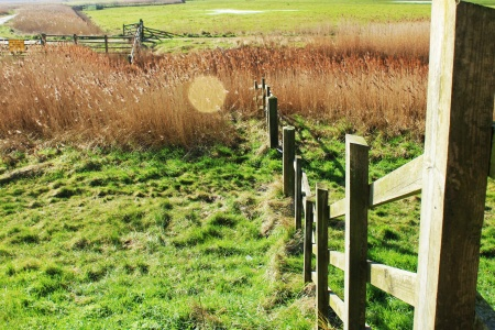 Fence and reeds