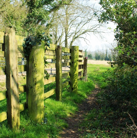 A gate for cattle