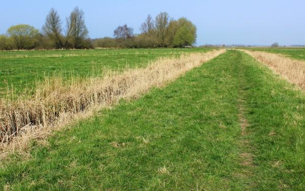 Halvergate marshes