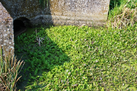 Drain, water-weeds and culvert